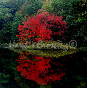 """""""Red Reflection"""""""