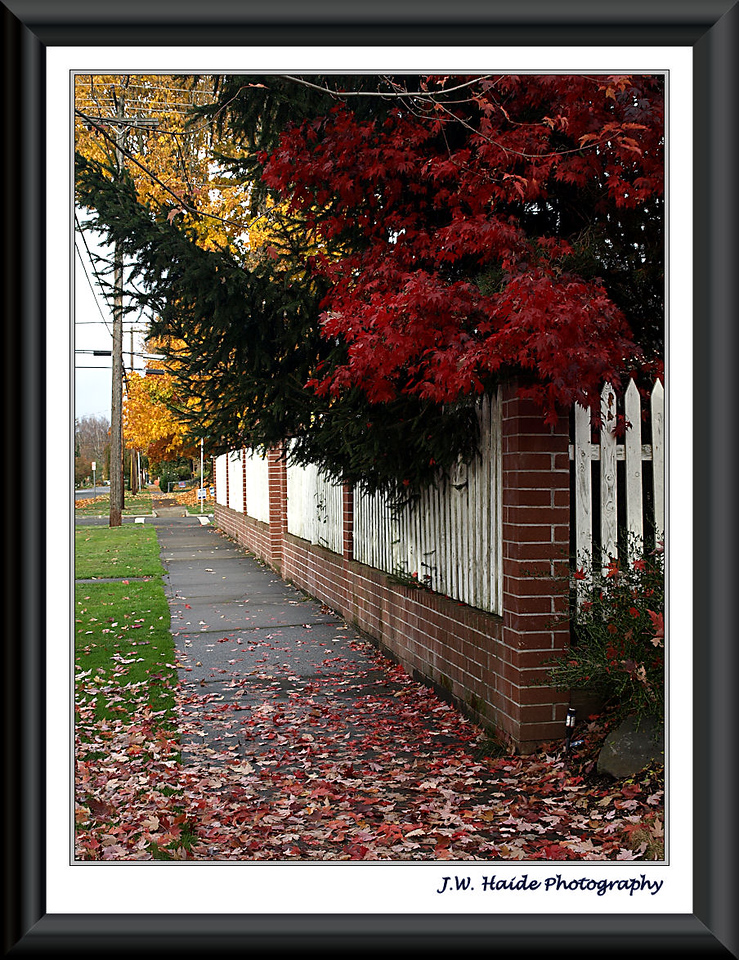 Fall Leaves over Fence
