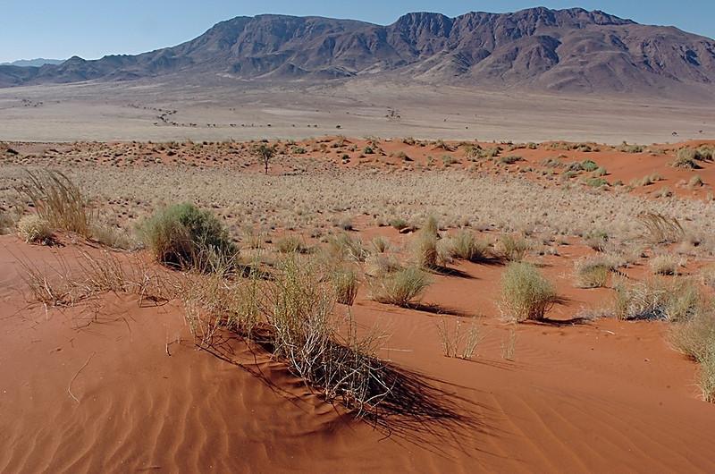 Namib Desert, NamibRand Nature Preserve, Namibia