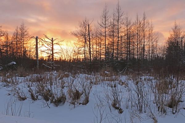 Sax-Zim Bog Sunset