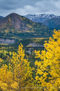 Alaskan Train Runs Through the Autumn-Kissed Landscape Denali National Park Alaska © 2015  TNWA Photography / Debbie Tubridy