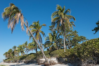 Keys to a great day at the beach:  1. Go to the beach.  2. Clear blue skies.  3. Pretty palm trees and other plants.  4. Seashells.