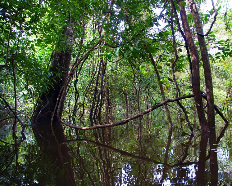 Mamirauá Reserve, Amazon, Brazil