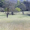 Grassy Field Along Day Rd near Gilroy, CA