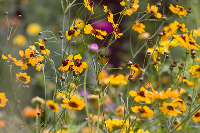 flowers_7400