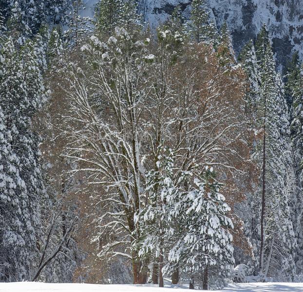 Yosemite Fire Falls-0158