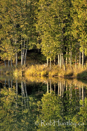 Cedar reflections in a mill pond, Waba River, White Lake area, Ontario. HDR I feel fortunate to have access to this beautiful area. It is private property of a friend of a friend. © Rob Huntley