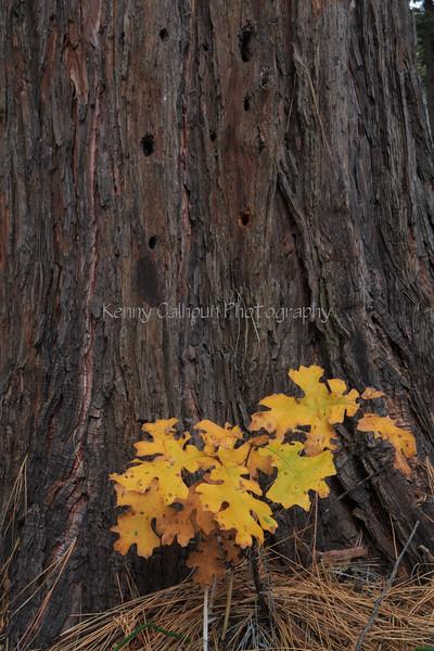 Yosemite 11-12-13 _N5A0393