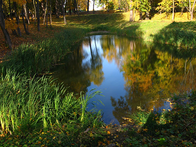 A little pond in autumn