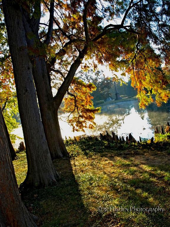 springgrove trees lake