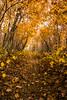 Yellow Leaf Tunnel - Appalachian Trail - SNP