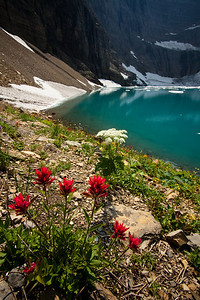 Iceberg Lake, Indian Paintbrush