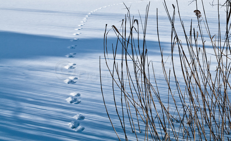 Tracks across the pond. Cropped version.