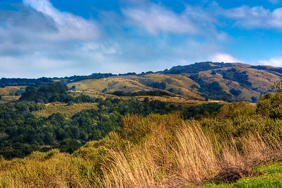 Rolling Hills of Portola Valley