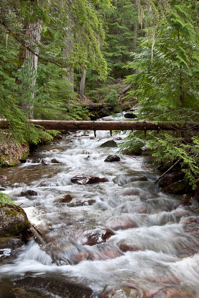 Stream running through Glacier Park, Montana - 2009