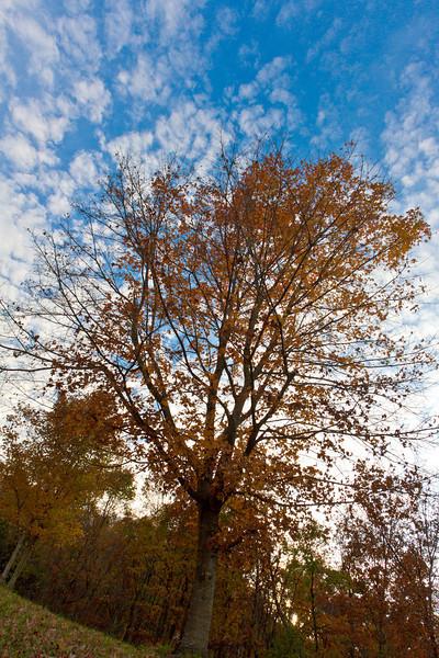 JPG-DLS-IMG_0642-Nov2010
