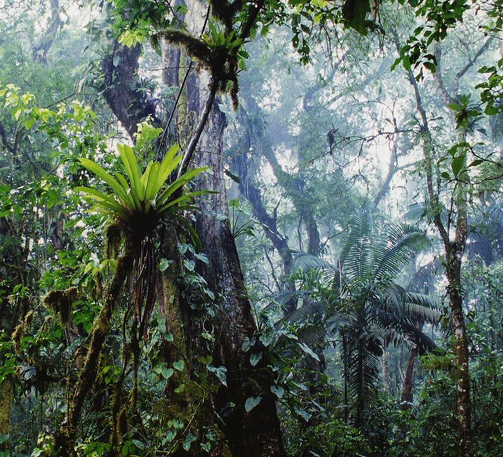 """""""Rainforest Awakening""""<br /> Costa Rica - La Selva Biological Station<br /> I started a rainforest hike as soon as the sun began to climb over the horizon, hoping to watch life begin to awaken. I discovered a breathtaking misty and foggy morning that embodies the spirit of the rainforest."""