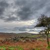 Moor Tree 330/365