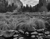 Yosemite 11-12-13 _N5A0303-2