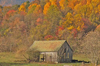 Fall barn in Alleghany Co., VA