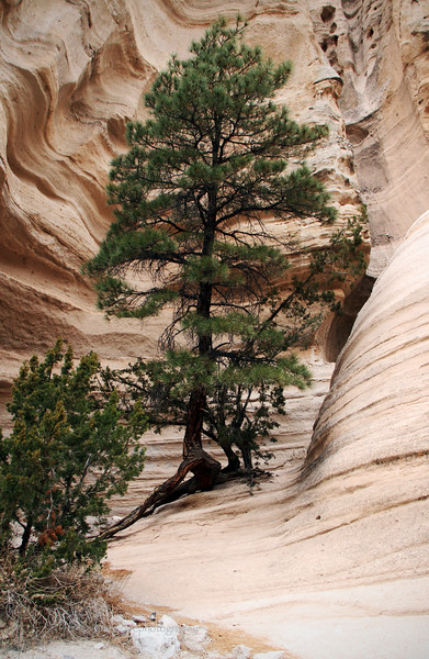 Tent Rocks Canyon, New Mexico