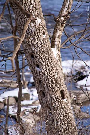 Woodpecker Condo