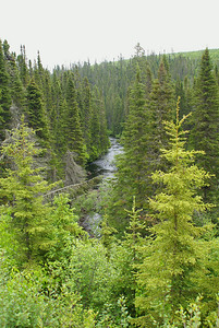 "A view of one of the mountain streams, as seen from Birch Lake Road within the Christmas Mountains.  Despite doing some research, I was unable to locate the name of this stream.  There is something about the tall, skinny spruce trees that always brings to mind the concept of ""wilderness"" for me.  I love how the spruce trees surround the stream, stretching off in to the distance.  The height of these trees can be deceiving...this stream was nearly 200 feet below the roadside.  Photo taken 14 June 2010."