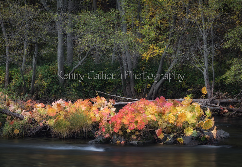 Trinity_River_Riverscapes_November_01,_20121N5A5339untitled
