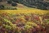 Napa_and_Sonoma_RainNovember_16,_20121N5A6464untitled