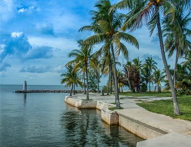 Palm Trees - Florida Keys