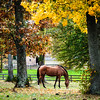 Fall colors on horse farm, Fauquier County, Virginia