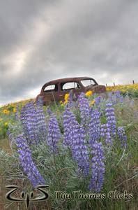 Car in Dulles / Wasshington / Oregon