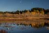 Rithet's Bog
