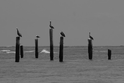 Remnants of the old Coast Guard Station, Ocracoke Island, N.C.