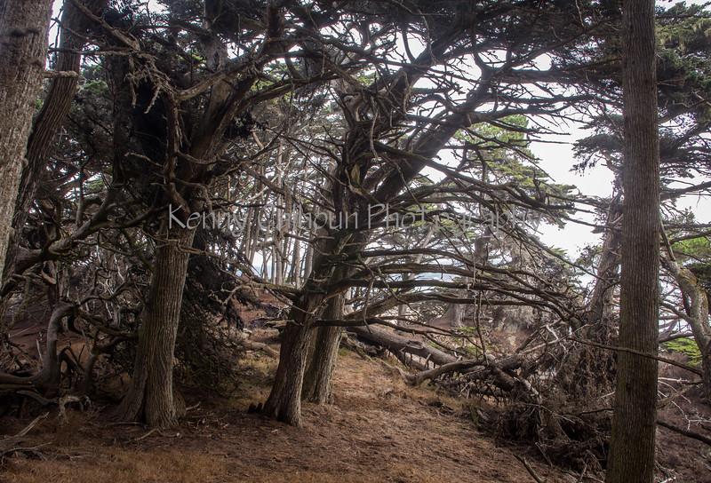 Point Lobos _N5A8112