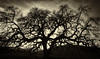 Bruce's Oak Sunset 2-17-20-
