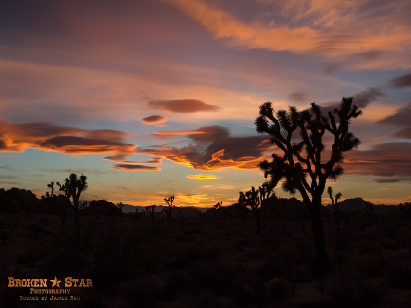 Western sunset.  Joshua Tree National Park