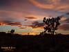 Western sunset.  Joshua Tree National Park