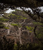 Point Lobos _N5A8146