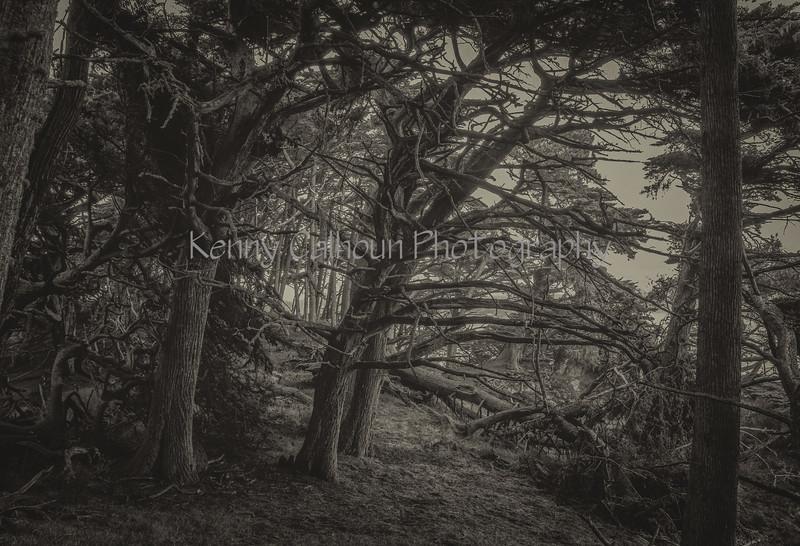 Point Lobos _N5A8112-Edit