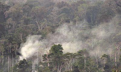 Ecuador, Amazon Rainforest