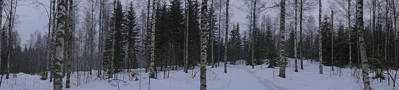 Koivikko - Birch forest