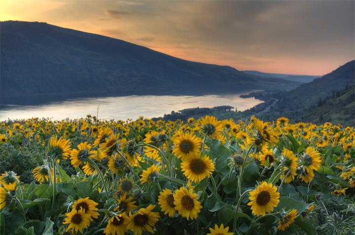 Rowena Crest Sunrise / Oregon