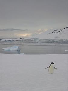 Pleneau Island, Antarctica.