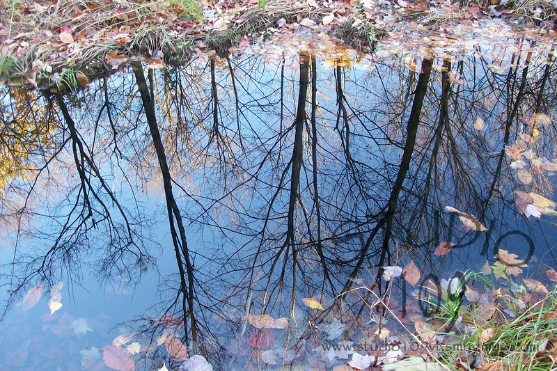 Tall Fall Reflections