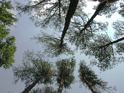 Virginia Trip 2006 - Pine Grove 10 Looking Up