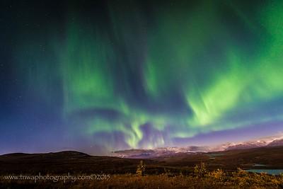Dancing Lights of the Aurora Denali Highway Paxson, Alaska © 2015  TNWA Photography / Debbie Tubridy