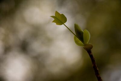 Spring Begins Anew