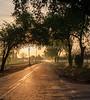 Nelson Grove Road Sunrise_N5A0087