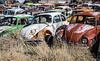 3-29-21 VW Graveyard-9788